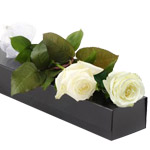 Two White Roses in Box