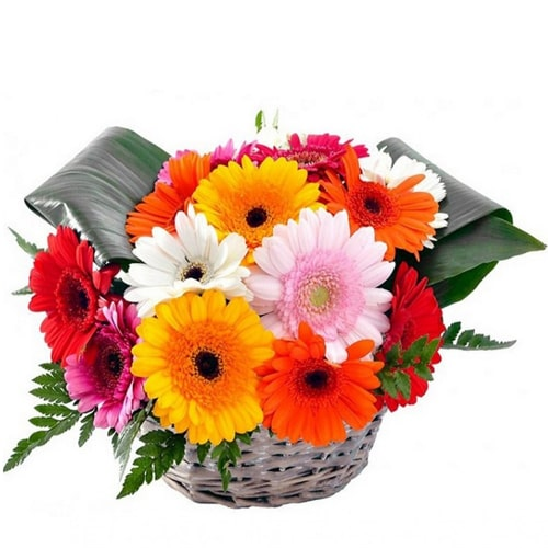Captivating Gerberas with Style