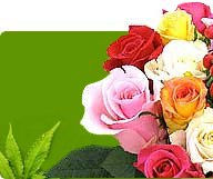 Japan Tokyo Florist, Flowers to Japan, Flowers Same Day Delivery in Japan