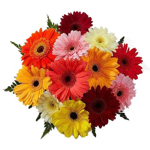 Fashionable 12 Gerberas