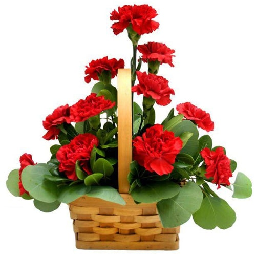 Treasured Authentic Love Red Carnation