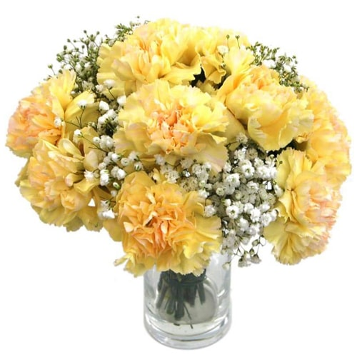 Radiant 12 Yellow Carnations in a Vase To
