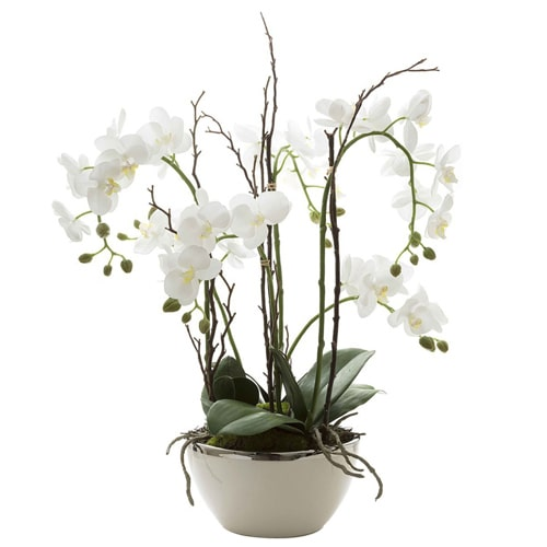 Lovely White Orchids in a Vase To Fukuoka
