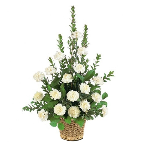 Blossoming White Carnations