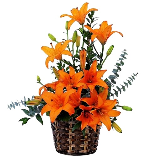 Lovely Basket Full of Pretty Lilies To