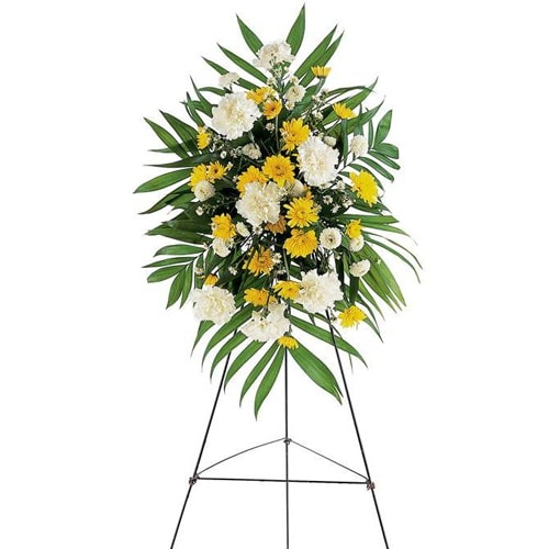 Striking Small Yellow and White Flowers To
