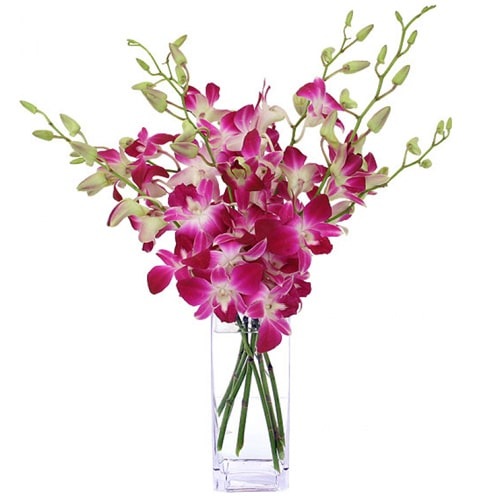 Blossoming Pure Expressive Love Mixed Orchid Blooms To