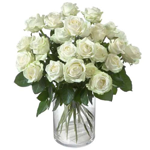 Cherished Classic Moments 24 White Roses To