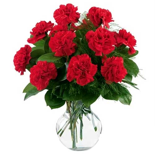 Stylish 12 Carnation Delight with Vase