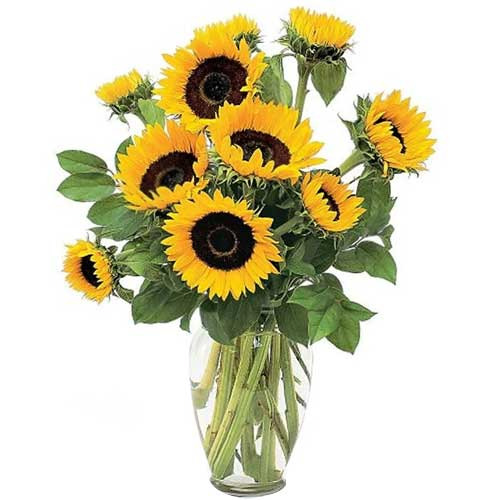 Classic Sunflowers in Vase